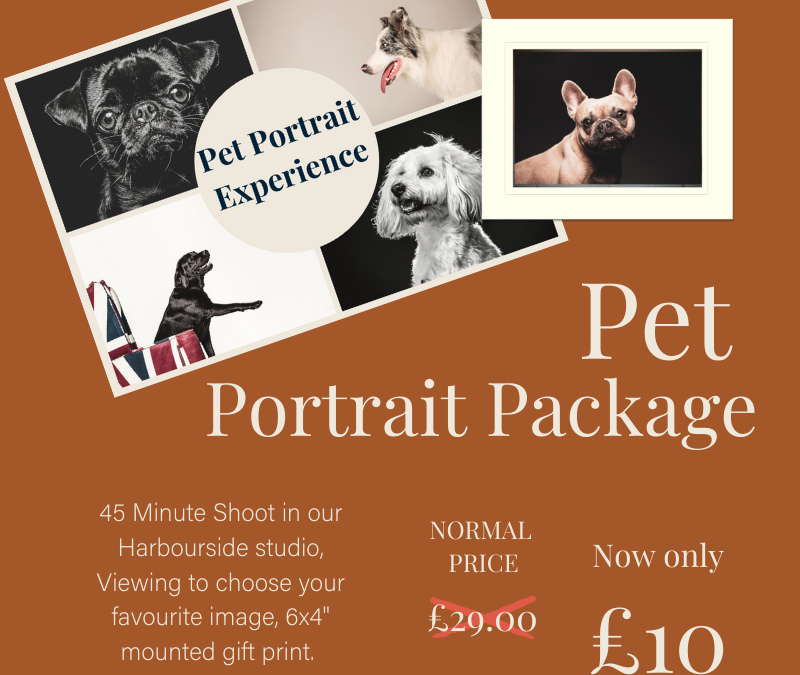 12 Days of Christmas – Day 4 – Pet Portrait Experience only £10